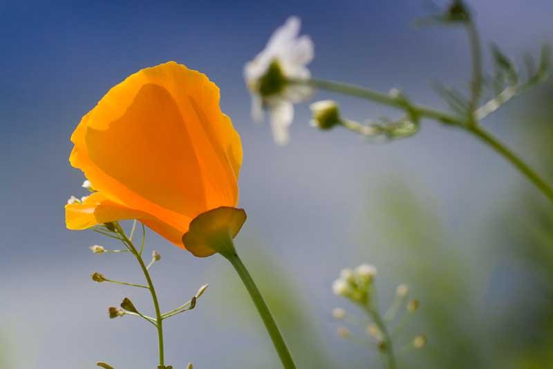 Blütensinfonie